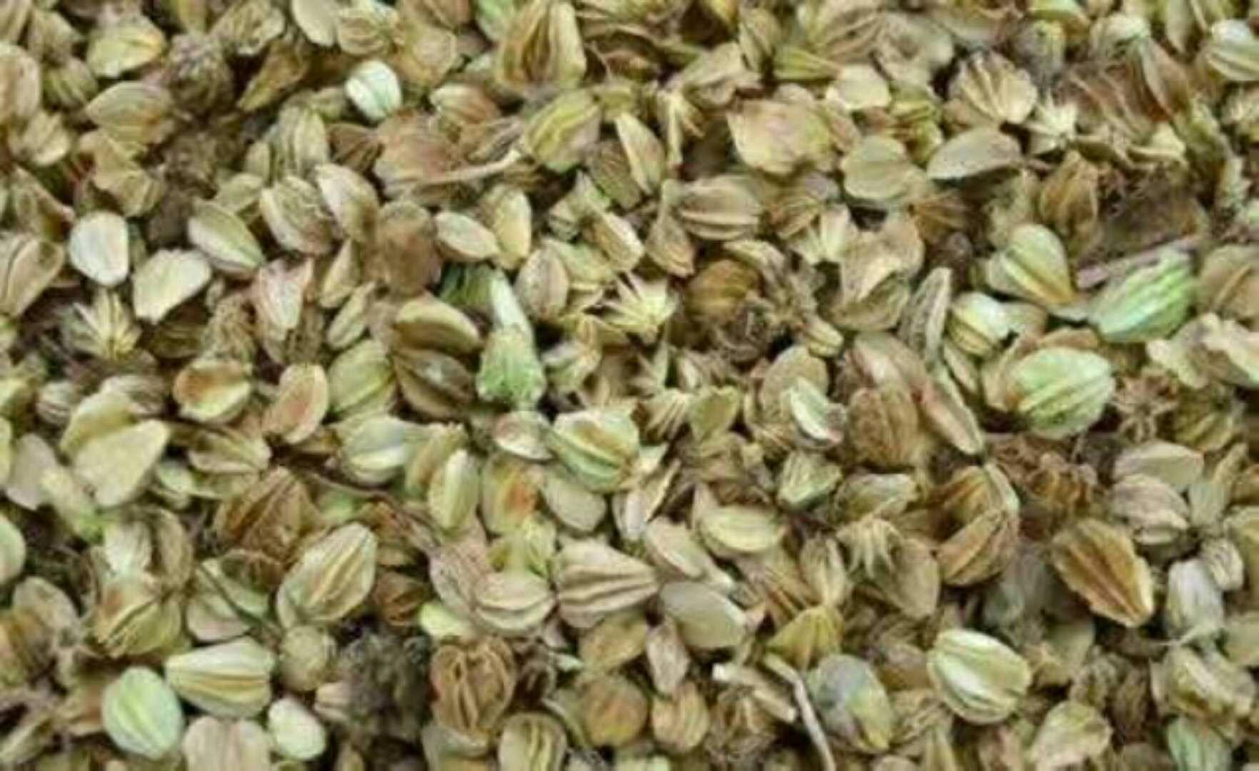 沙参籽 药材种子